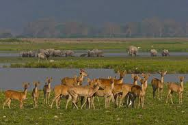 Kaziranga National Parkne