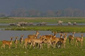 Kaziranga National Parkne